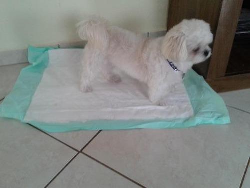 tapete higienico para cães c/70 unidades - 80x60 - 2ªlinha