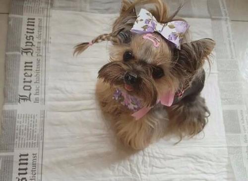 tapete higiênico para cães c/140 unidades - 80x60cm/1ªlinha
