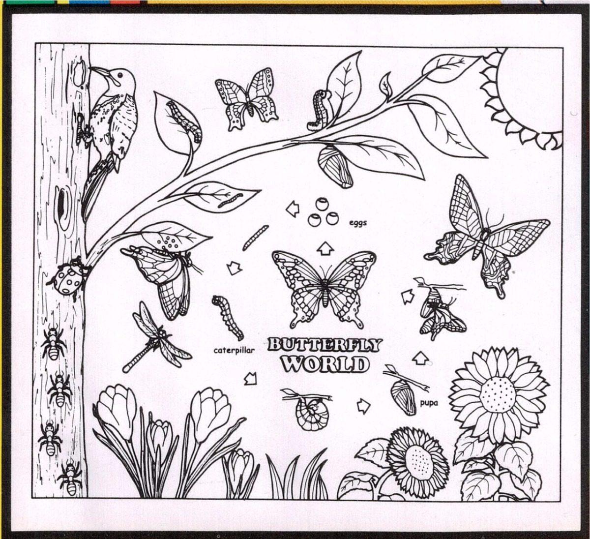 Tapete Mariposa Para Colorear Reusable Niña Butterfly World