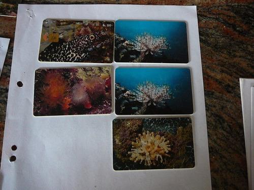 tarjeta  serie fauna marina coleccionable
