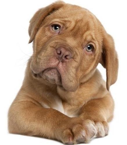 taste of the wild puppy 28 l envío gratis