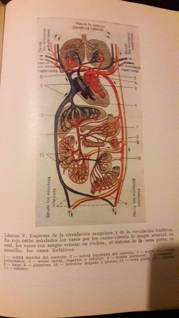 Lujo Agujeros De La Anatomía Humana Y Fisiología Edición 13 Fotos ...