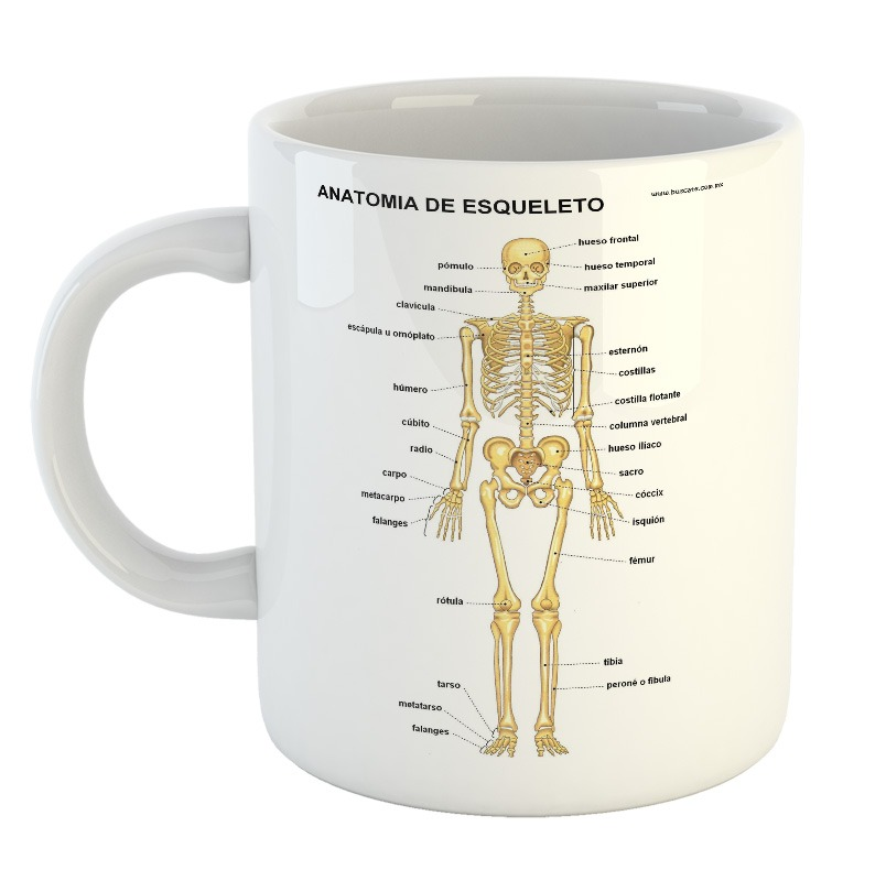 Taza Esqueleto Skull Calavera Cuerpo Humano Huesos Mod7 - $ 249,99 ...