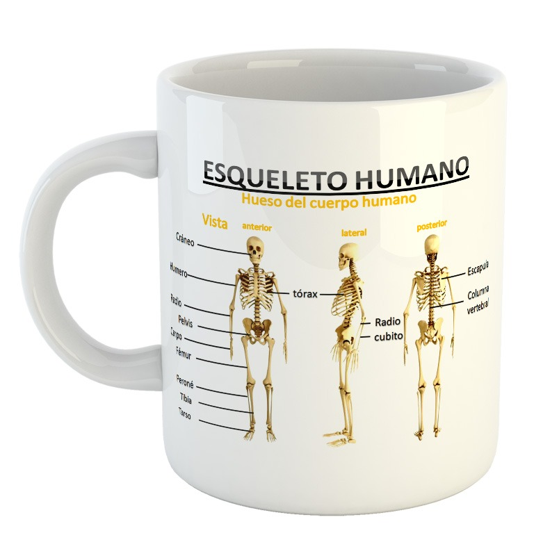 Taza Esqueleto Skull Calavera Cuerpo Humano Huesos Mod9 - $ 249,99 ...