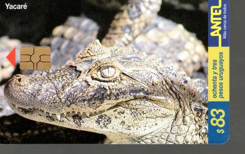 tc 86 - yacare - caiman - ( latirostris)