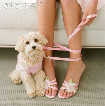 te enseño a que tu perro te obedezca (en linea)