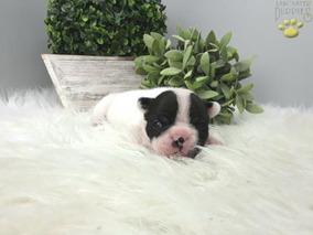 Yorkshire Teacup - Perros de Raza en Mercado Libre Argentina