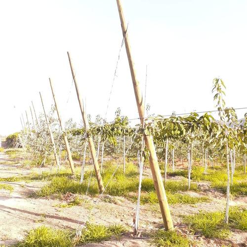 techos para frutales parrones  reparaciones estructuras