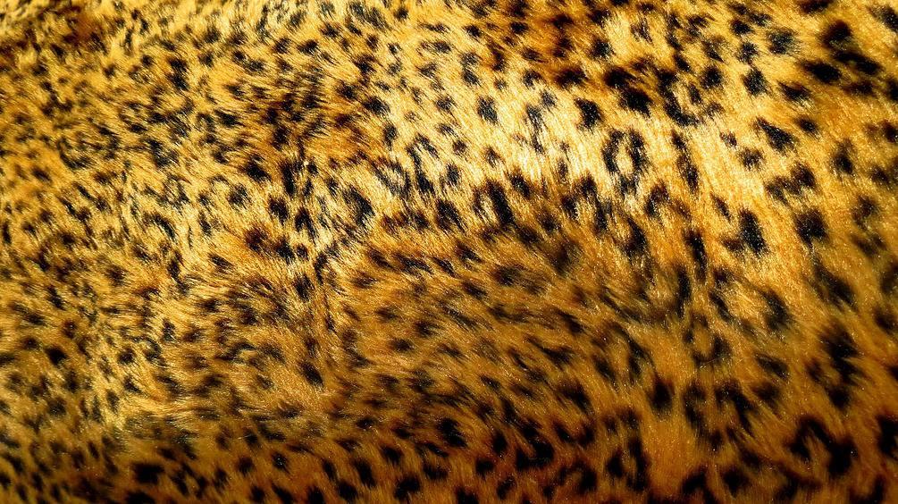 f9270a0df5ed02 Tecido Pelúcia P Chinelos Pantufas Estampado Onça Zebra 12mm