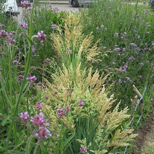 tecnico en jardinería,uba paisajismo,mantenimiento,huertas