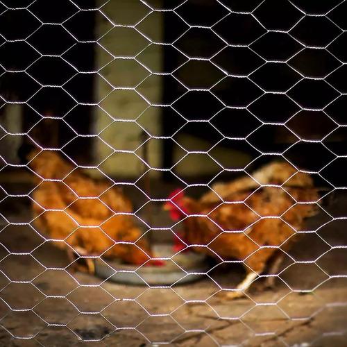tela arame para galinheiro 1,80mx50m  bwg 22 beltools
