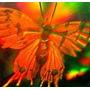 Holograma Tridimensional Protege Pantalla De Celular Mica