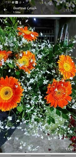telmo flore, naturais, arranjos, unidades, encomendas,