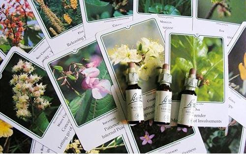 terapia floral (flores de bach)