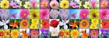 terapias con flores de bach, coach, orientación psicológica