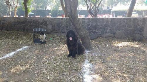 terranova cachorros