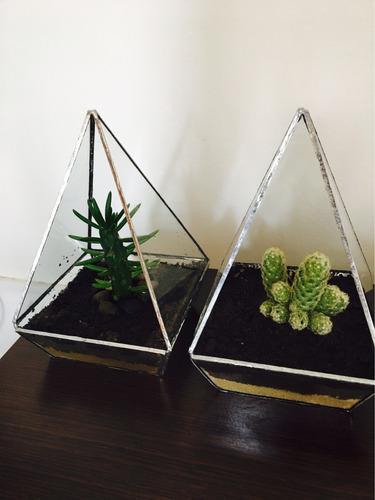 terrario con cactus o suculentas