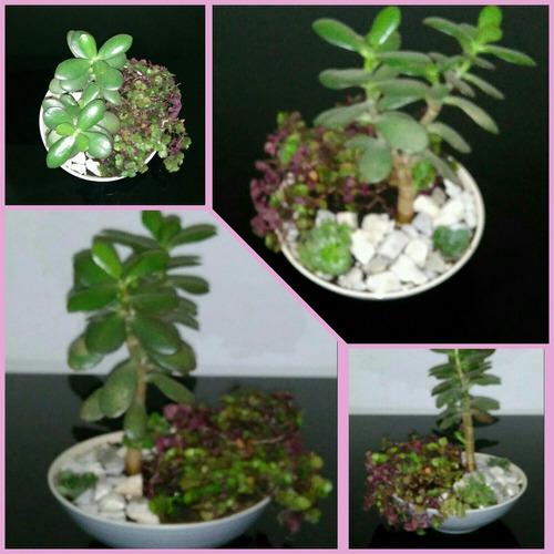 terrario mini jardín de plantas suculentas y tunas