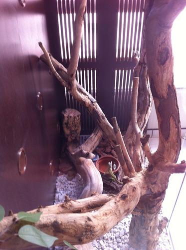 terrário para iguanas , camaleão ,  répteis jibóia , phyton