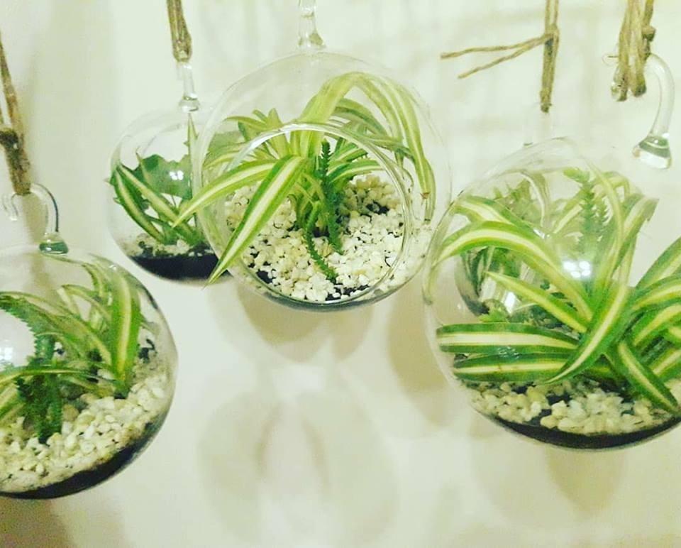 Terrario Plantas 16cm Esfera Vidrio Decoracion Eventos 45000 En - Vidrio-decoracion