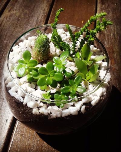 terrarios de suculentas y cactus. centro de mesa. decoración