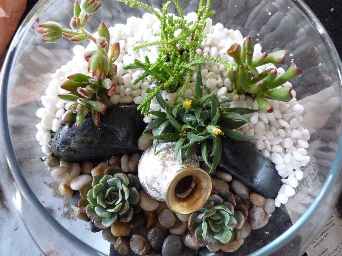 Terrarios Plantas Suculentas Y Cactus Regalos Ecologicos S 6 - Terrario-para-plantas