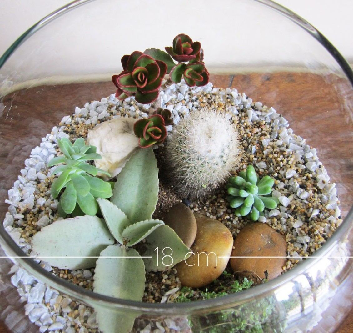 Terrarios plantas suculentas y cactus regalos for Curso cactus y suculentas