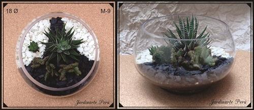 terrarios regalos vivos, plantas enanas suculentas y cactus