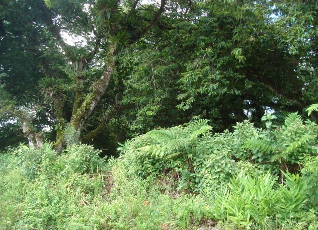 terreno 10 x 32 em tapiraí/sp - área urbana