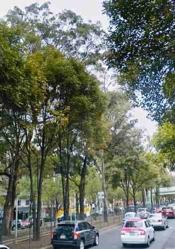 terreno  1000 m2 en colonia anahuac  con uso de suelo comercial hm/10/30/m