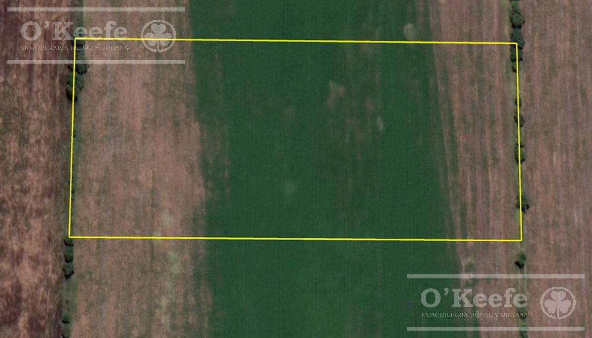 terreno 3.59 has - centro agricola el pato