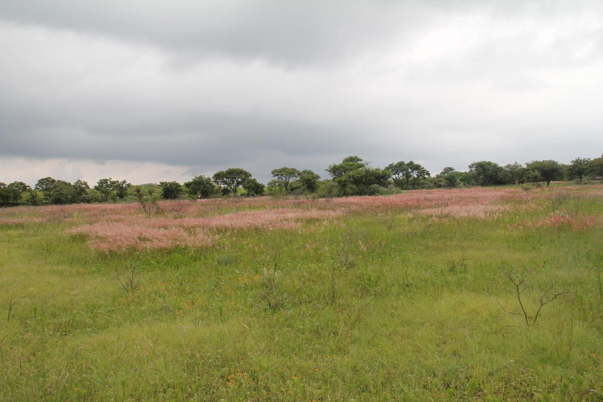 terreno 5,000 m² hasta 12 hectáreas / cerca de toyota