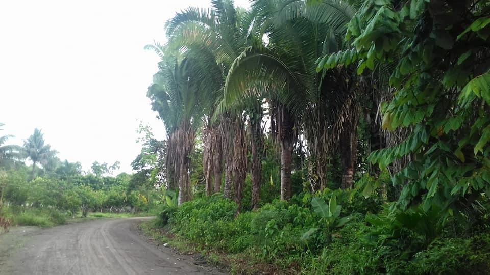 terreno 570 m2 en la selva amazónica tiputini en el yasuni