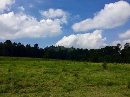 terreno 7has con bosque