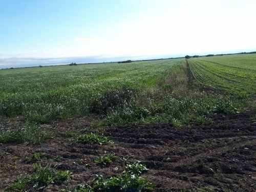 terreno 9.5 hectareas uso agricola general teran nl