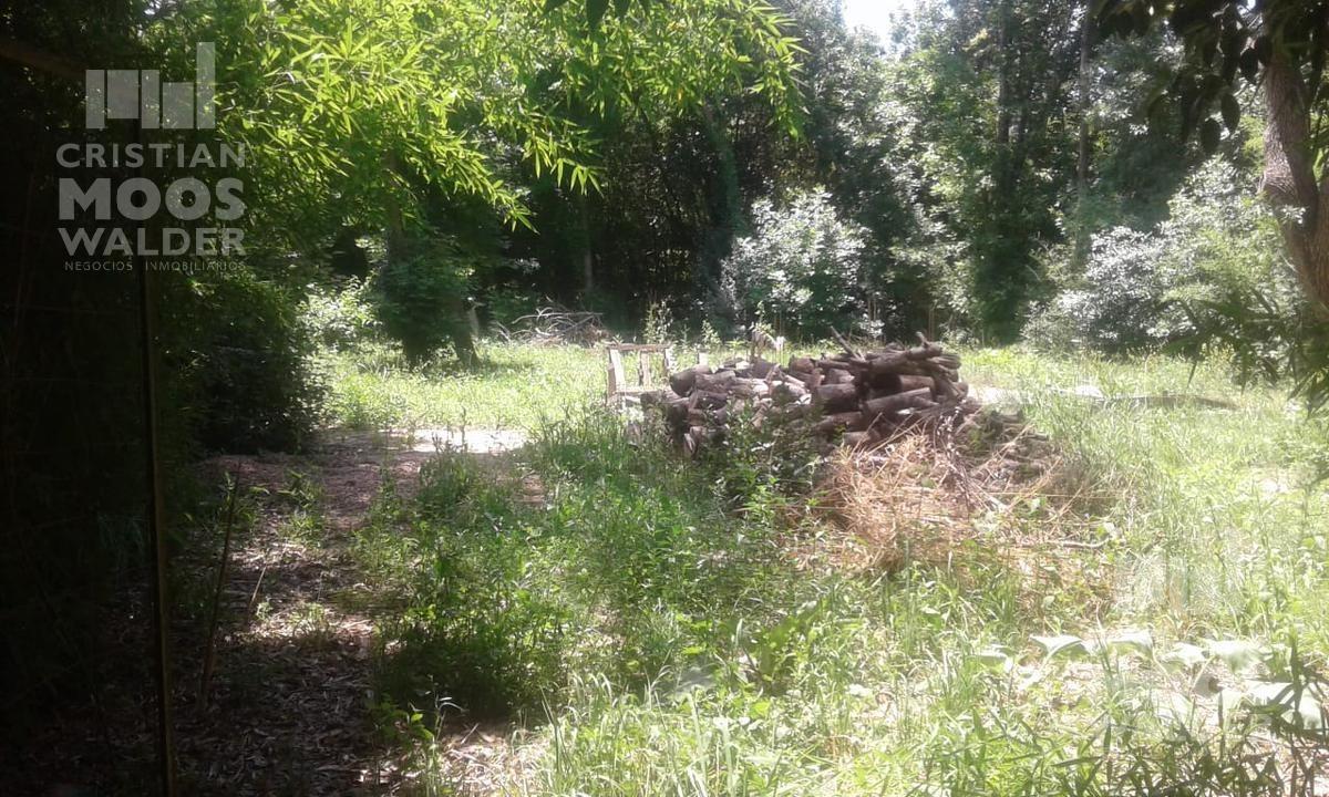 terreno - acacias blancas