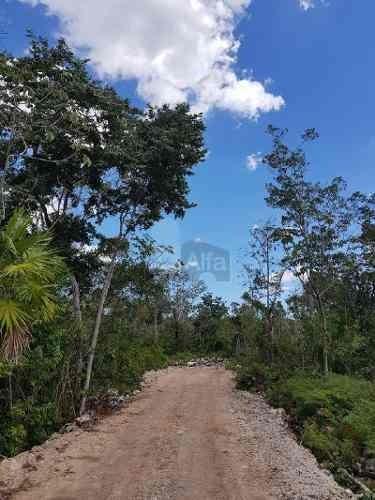terreno agrãcola en venta en k.m 308, benito juárez, quintana roo