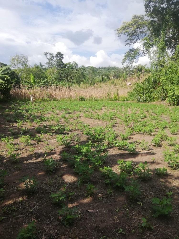 terreno agrícola chacra para todo tipo de senbrio