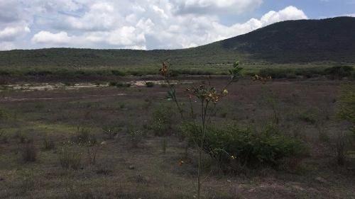 terreno agrícola el cazadero