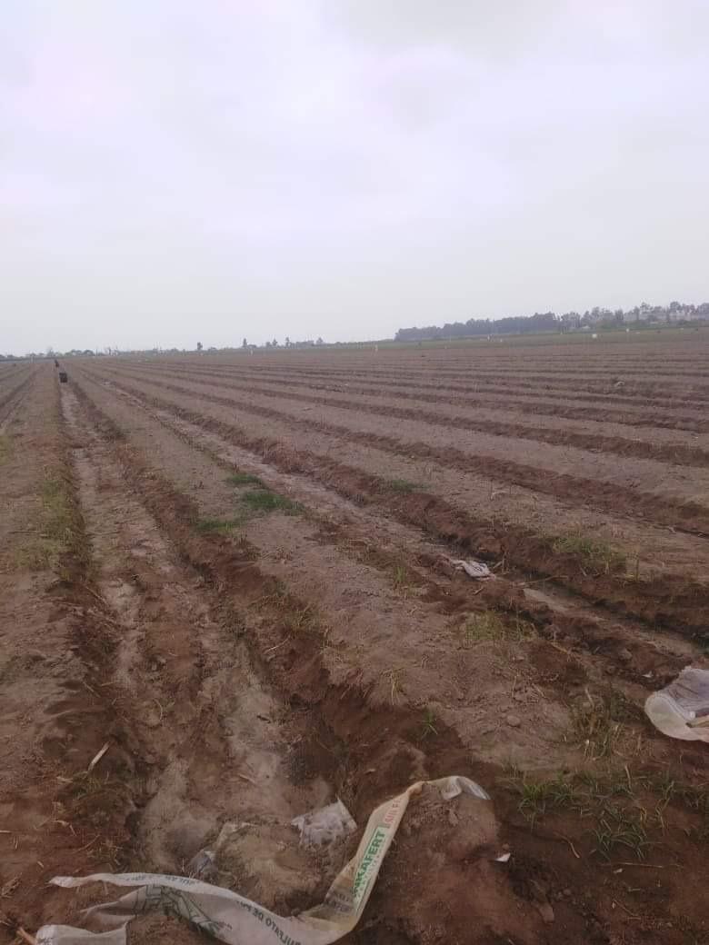 terreno agricola en el carmen-chincha - fundo mariposa