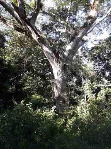 terreno agrícola en tekax, yucatan, 526 hectáreas.