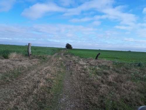 terreno agricola en venta 11.5 hectareas general teran nl