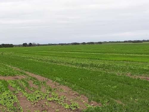 terreno agricola  en venta de 21 hectáreas  general teran