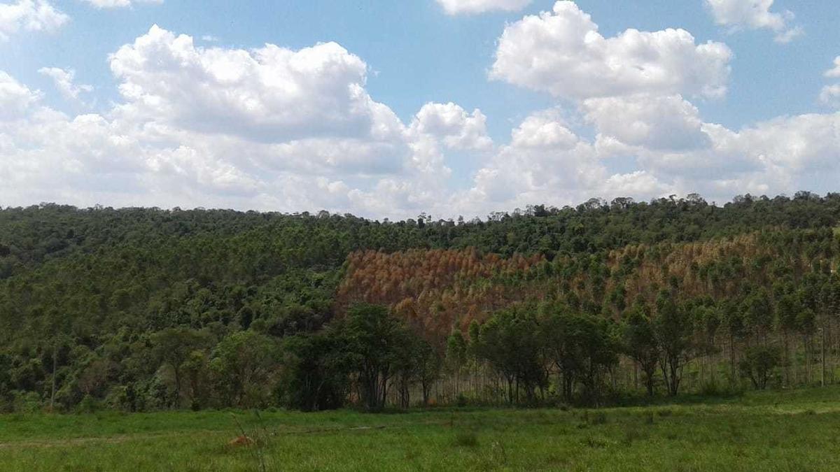 terreno amplo no interior de são paulo