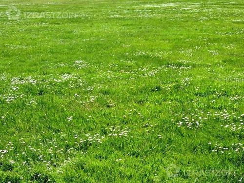 terreno - araucarias
