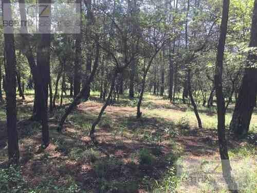terreno arbolado ideal para cabañas, huasca hidalgo