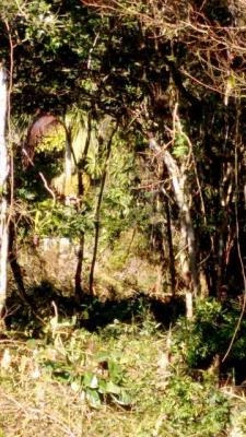 terreno barato em itanhaém com 207 m2 - 4448/p
