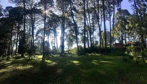 terreno boscoso en el centro de avándaro