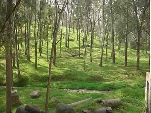 terreno boscoso para desarrollo habitacional