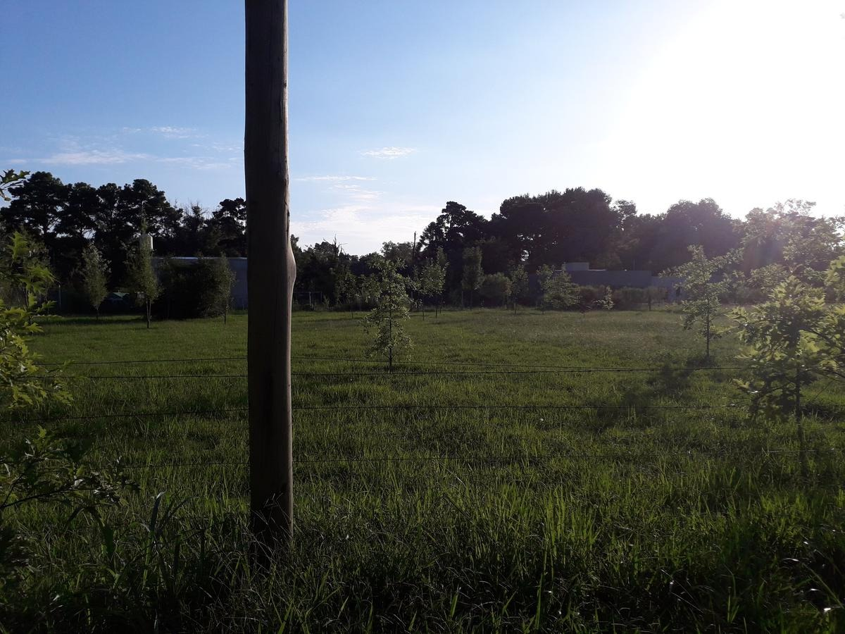 terreno - campana